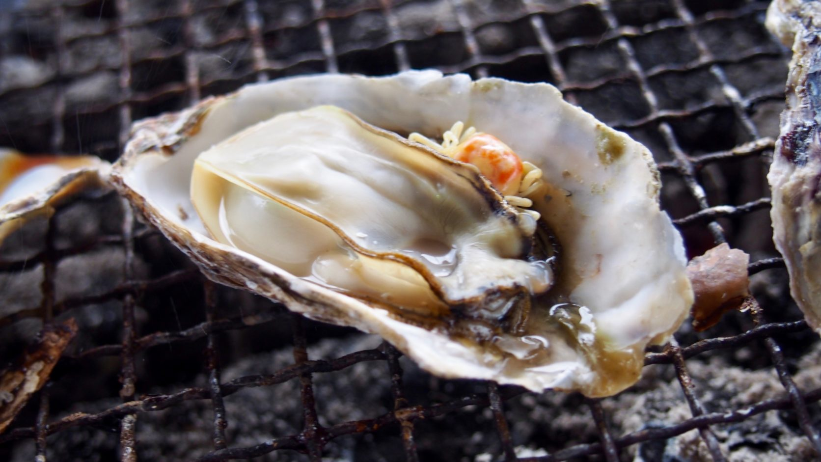 広島の名物グルメ「牡蠣」