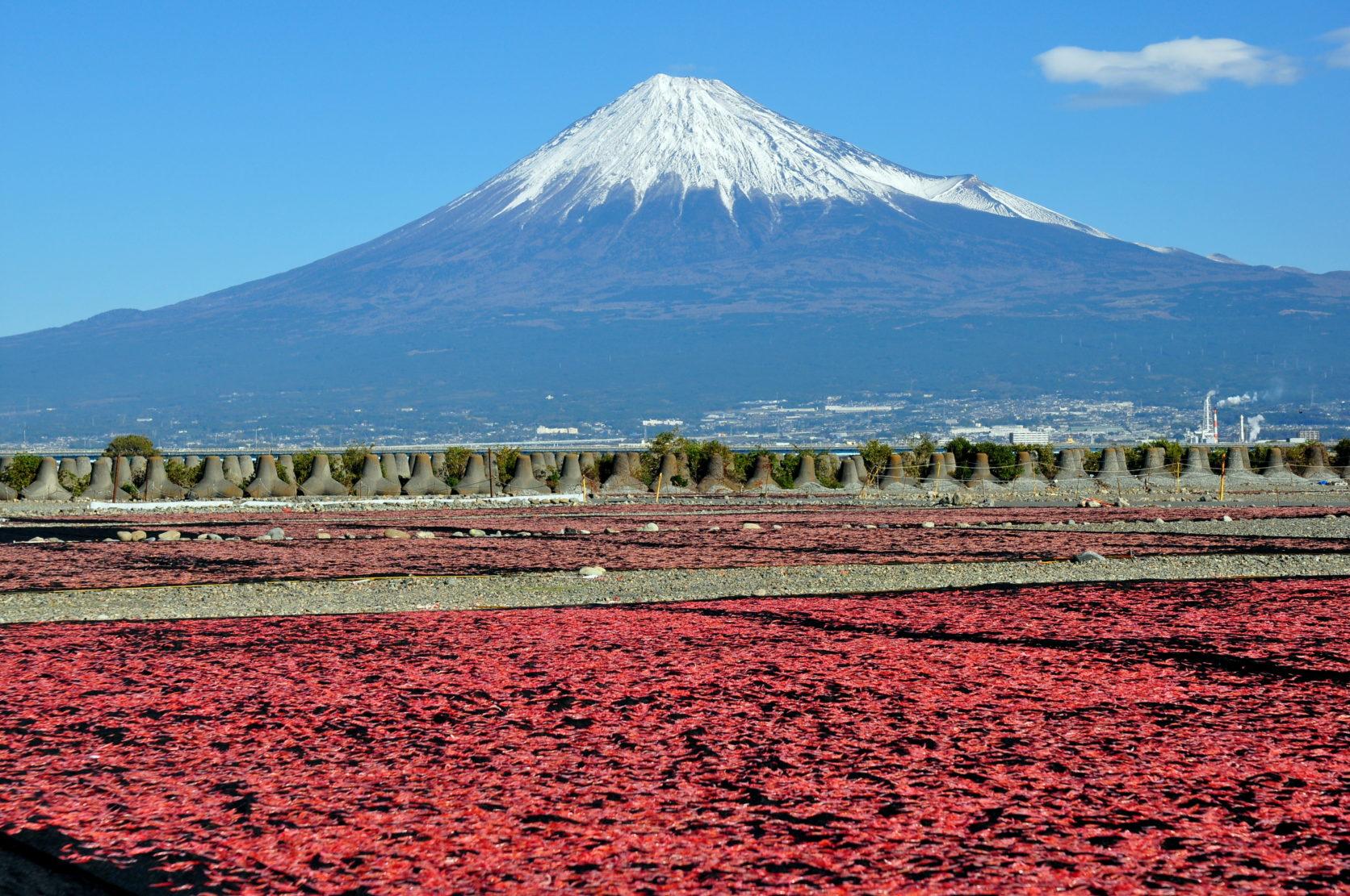 静岡の名物グルメ「桜えび」